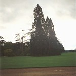 Blenheim Palace - Tree - 1993