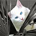 White Cat by Citte