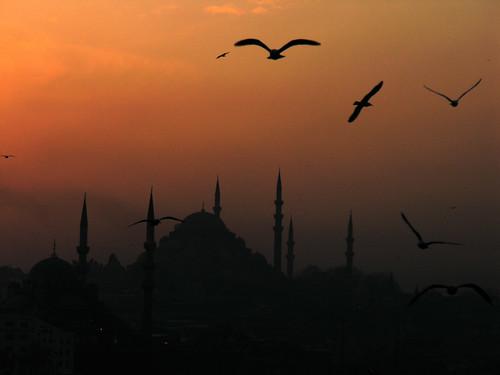 Isztambul és a sirályok