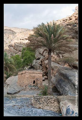 mountains tree rock river gulf middleeast canyon palmtree riverbed oman wadi rivier alhamra flus ghul alhajarmountains addakhiliyahregion منطقةالداخلية addakhiliyah