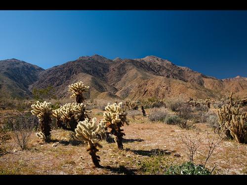 california park landscape desert state canyon borrego prick cp cholla 2010 pricks hellhole anza muzzlehatch