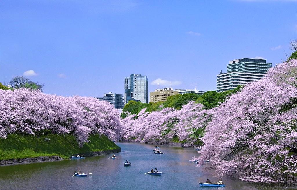 Blooming Tokyo