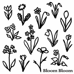bloom-bloom_medium
