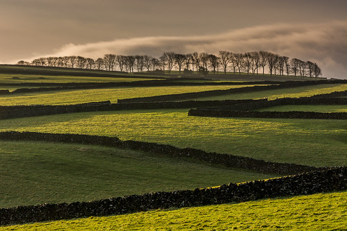 derbyshire peakdistrict limestone whitepeak drystonewalls walls morning sunlight shadows fields trees lineoftrees litton