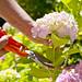 Caroline plouff | How to Prolong Life of Cut Flowers by carolineplouff