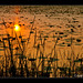 Sunset in reflection by Amit Basu