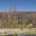 Angora Fire Survey Site F