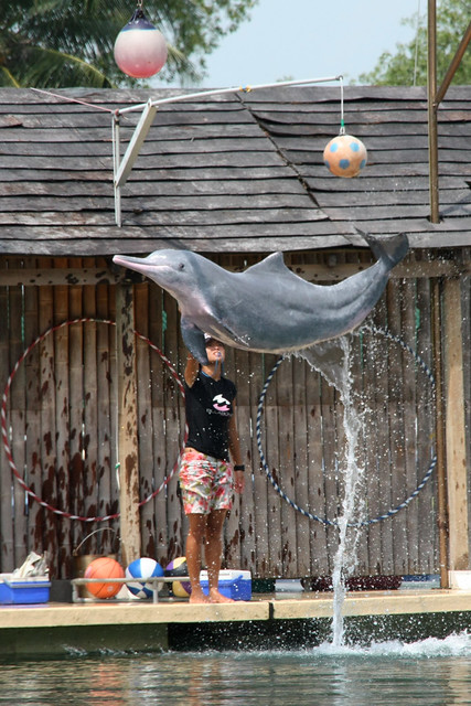 Dolphin Island Singapore Timings