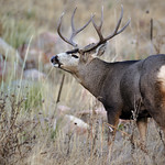 Can Antlers Cause Dog S Enamel To Break