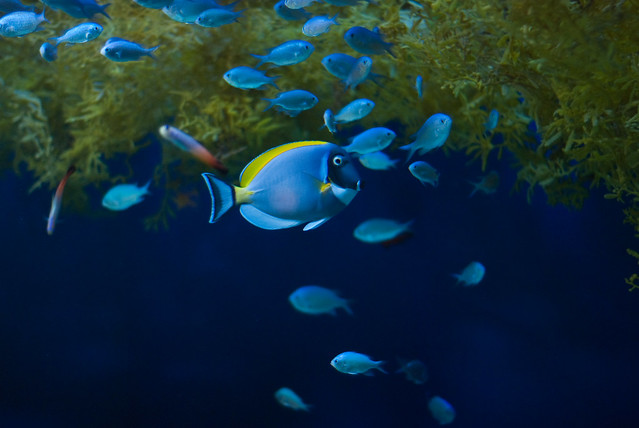 Camden Aquarium Flickr Photo Sharing
