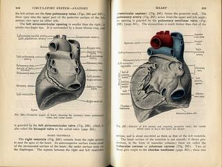 A & P Heart 1 (color)