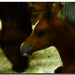 Small photo of Nurture the Foal