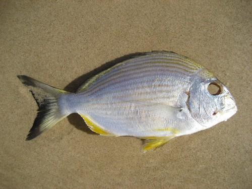 eyeless fish