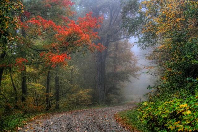 Mystical Mist of Autumn
