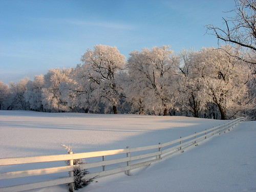 trees winter snow rural landscape frost hoarfrost iowa fenceline winterscene elmstreetglobalgallery theflickrstationworldexaminer citizen110