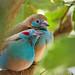 Birds in Captivity