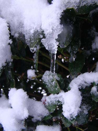 plants weather
