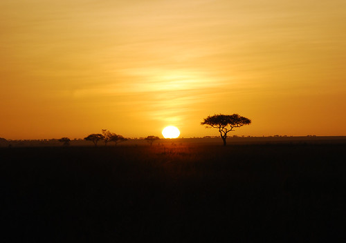 africa sunrise tanzania alba savannah serengeti savana