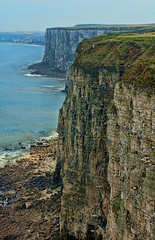 Bempton Cliffs, Bridlington, East Yorkshire