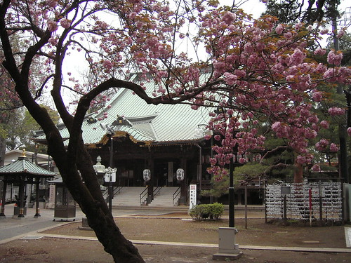Myoohooji temple in spring
