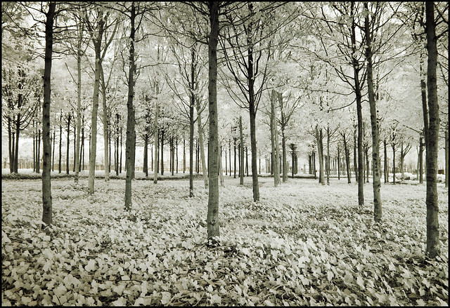 2105 Infrared Trees