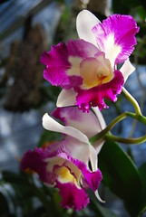 Blc. Tsutung Beauty