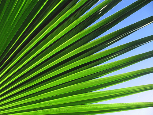 blue sky tree green gallery florida palm frond palmtree keylargo palmfrond 10favs assignment52 assignment52482009 40veiws