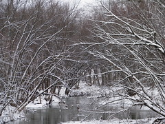 woodland, branch, winter, tree, snow, ice, frost, winter storm, freezing,