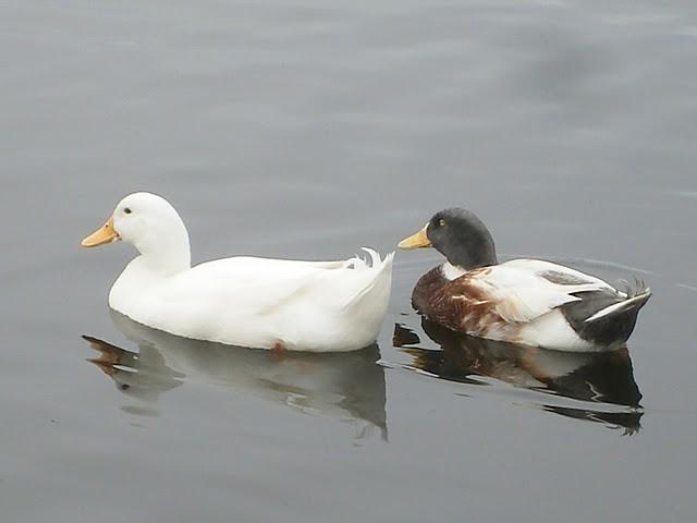 Ducks Weekly Fashion Fitting Room