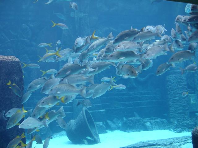Atlantis Aquarium Bahamas Flickr Photo Sharing