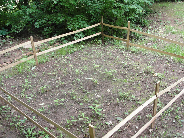 Amateur Garden. Tomatoes, Onions, Bell Peppers. All started from seeds, ...
