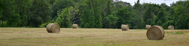 Hay Field at Beecher and Center Roads - Woodbridge, Connecticut