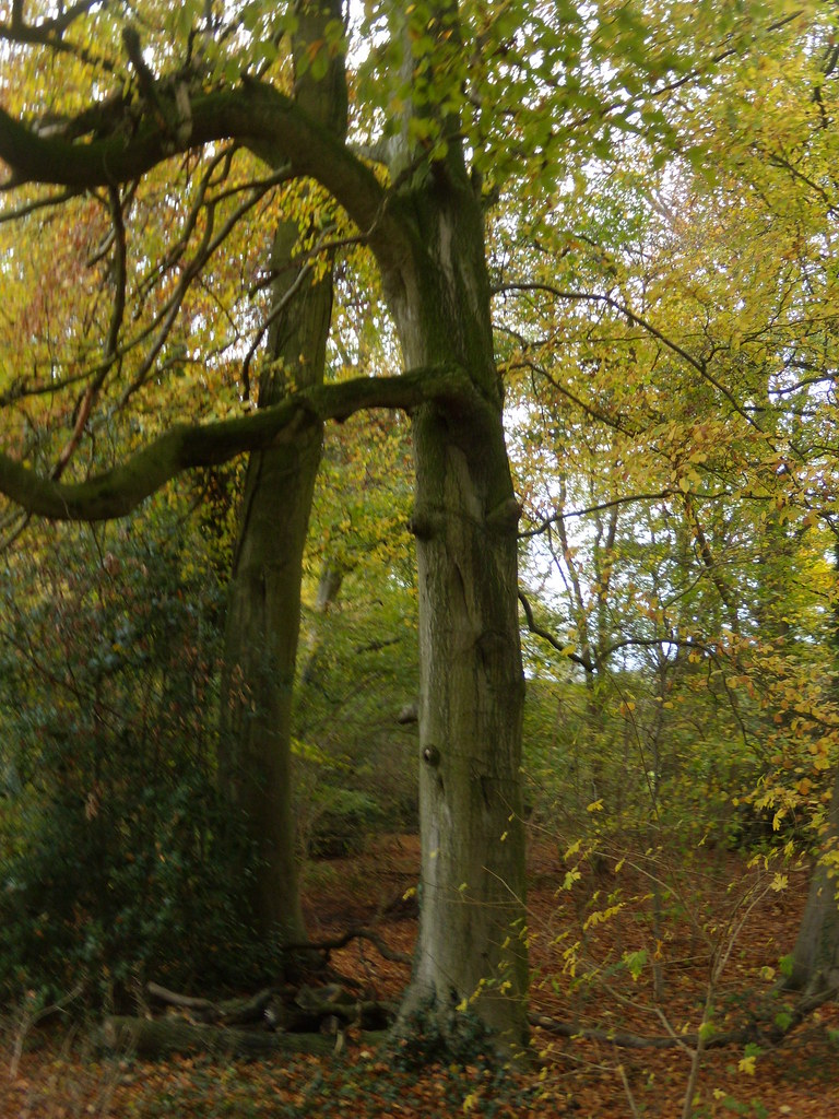 Autumn colours Amersham round walk