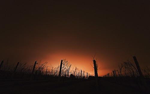 autumn fall night clouds canon eos vineyard long exposure 40d