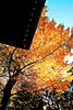 Autumn 2009 by ami_harikoshi