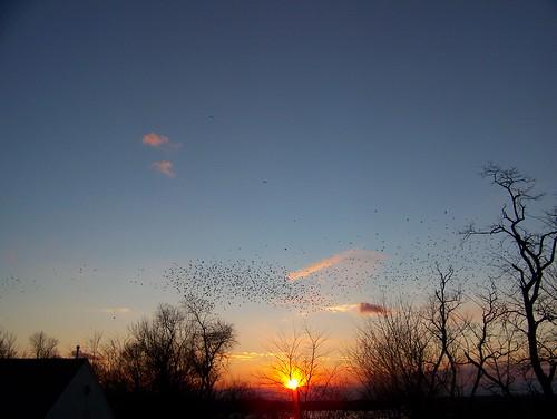 sunset bird blackbird riverclub
