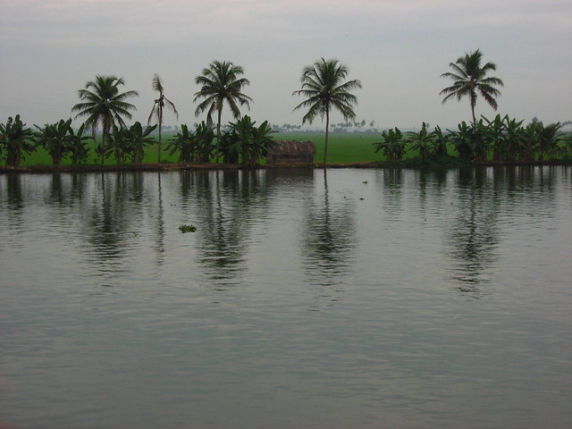 Paddy fields of Kuttanadu