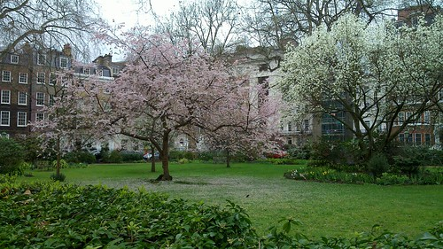 Spring Trees in London England
