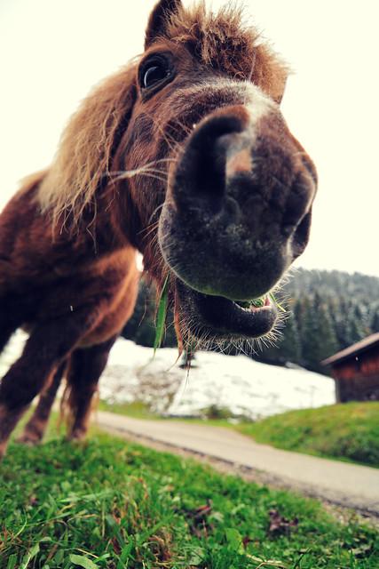 Pony Munch