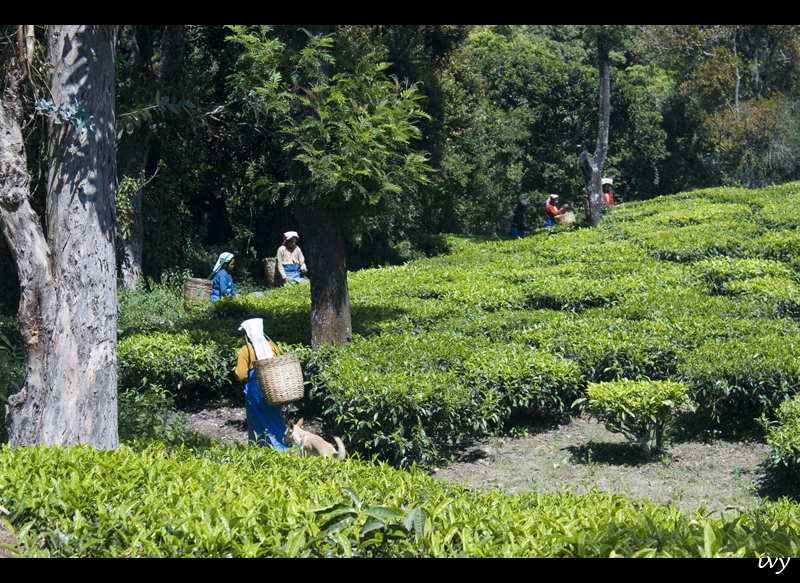 Top Places to visit in Ooty
