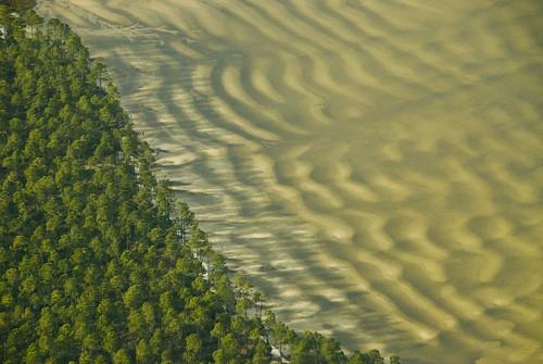 green nature lines plane sand waves view natural air pinetrees panamacitybeach saltwater airview westbayflorida