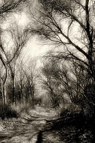 california trees landscape nikon def audubon weldon kernville d300 kernriverpreserve 2ndplace nikond300 desertempirefair2010