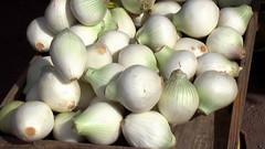 coconut(0.0), garlic(0.0), flower(0.0), shallot(0.0), plant(0.0), vegetable(1.0), onion(1.0), produce(1.0), food(1.0),