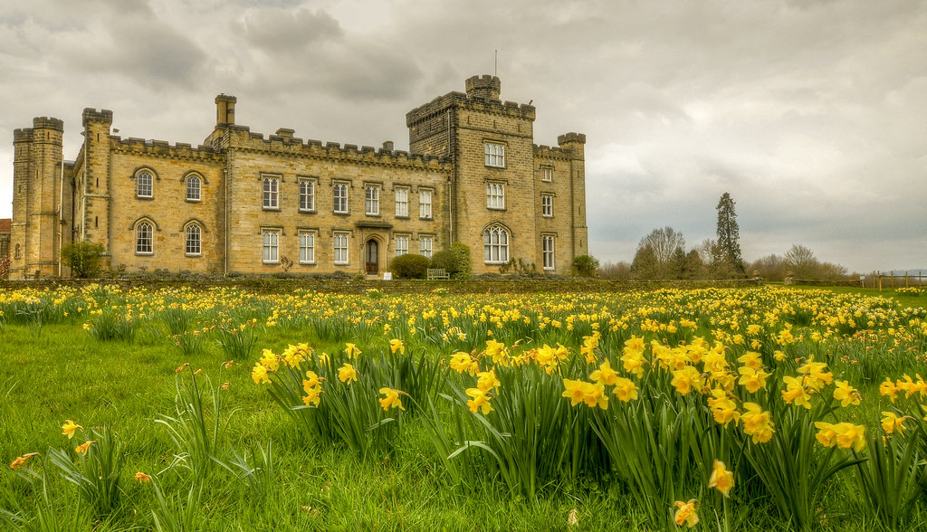 Yellow heads Another sea of daffodils, this time at Chiddingstone Castle also in Kent