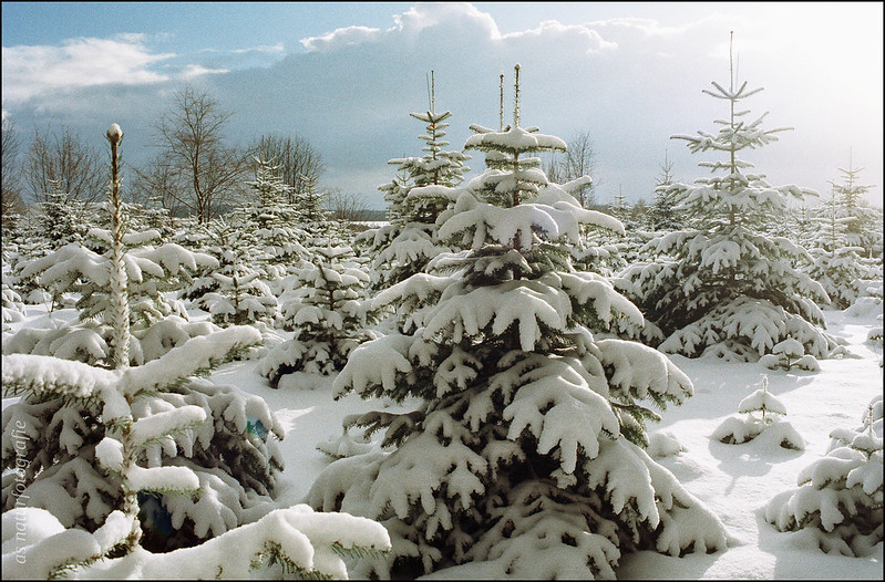 Winterspaziergang am Katzenbuckel (6)