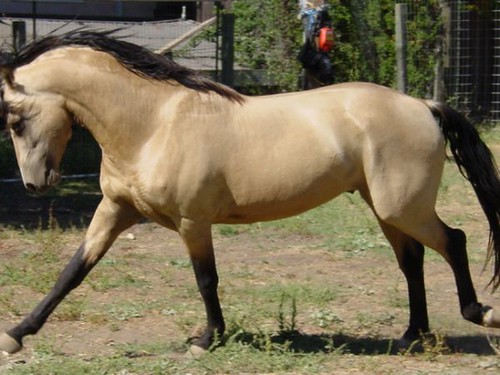 buckskin dating At any given time i may have a different variety or pre-made buckskin clothing  available for sale i try to keep this website up to date by listing these items below, .