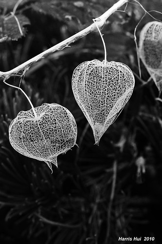 Happy Valentine's Day - Lantern Flowers BW N1306e