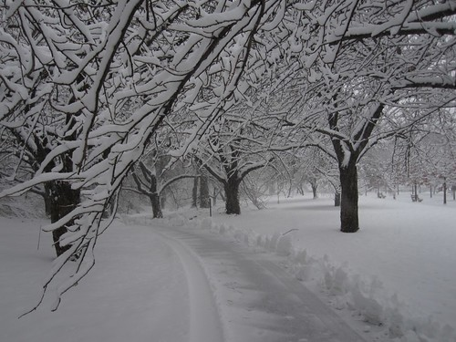 Snowy Cherry Walk