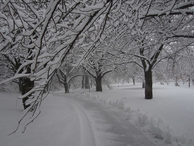 A truly lovely stroll on Cherry Walk this morning in the midst of the snow storm. Photo by Rebecca Bullene