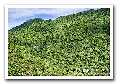 weekly shot: the Atlantic rainforest from the train
